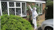 Wasp Nest Removal Guildford