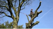 Stockport Tree Surgeon