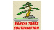 Bonsai Trees Southampton